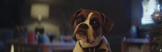 Buster_The_Boxer_-_John_Lewis_Christmas_Ad_07-large_trans++NJjoeBT78QIaYdkJdEY4CnGTJFJS74MYhNY6w3GNbO8